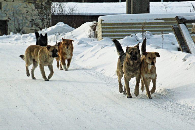 отлов бродячих собак