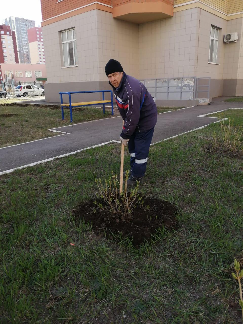 Окапываем деревья на всех МКД