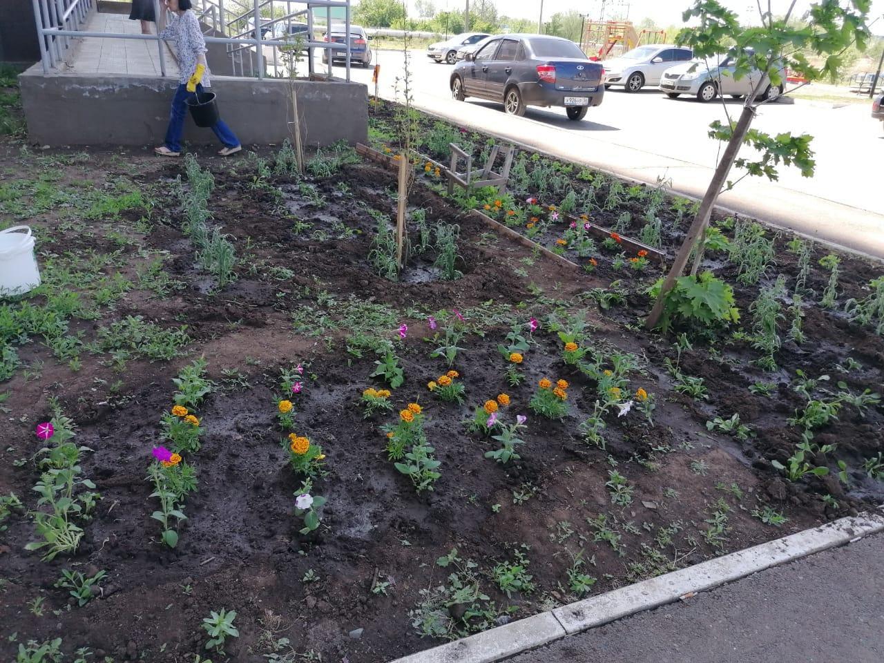 Высадка цветов Ямашева 8